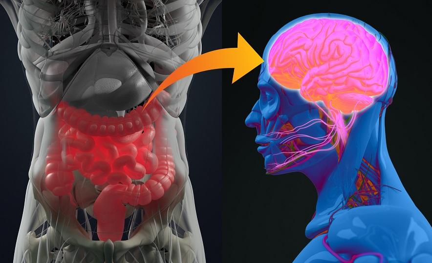 Gehirn und Darm - glaempe