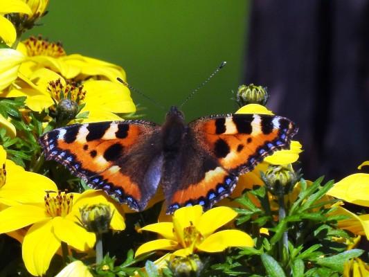 Schmetterlings-Effekt - Tipping Point