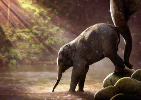 Elephant 2380009 1920